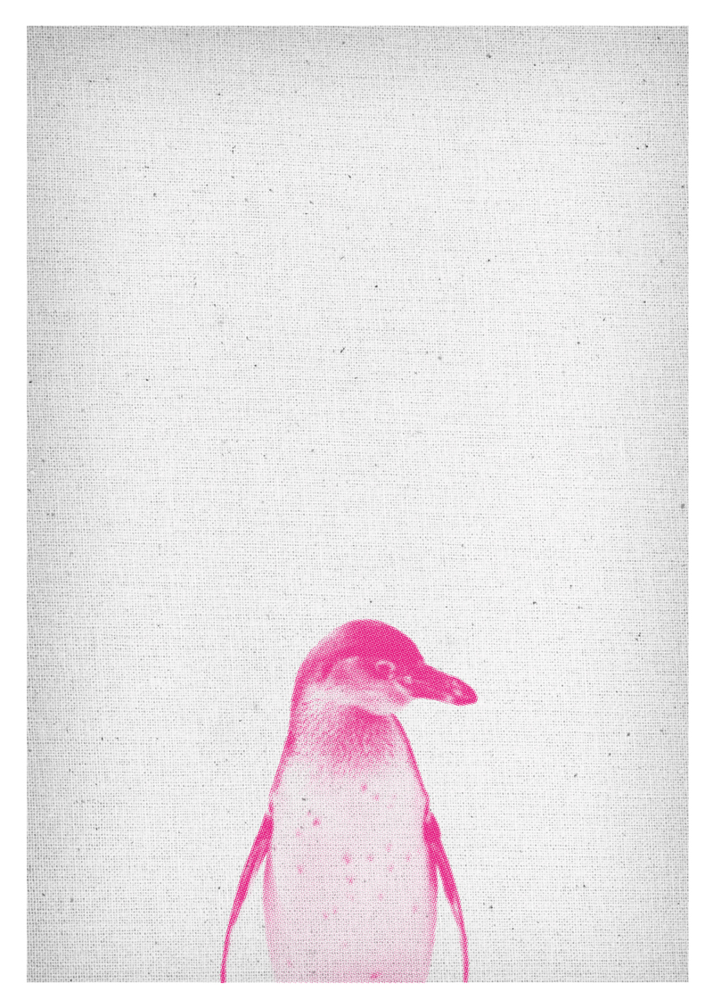 Penguin Print Safari Kindergarten Wall Art Animal Print pink rose Decor printable diy Poster design Download Nursery kids home design ideas