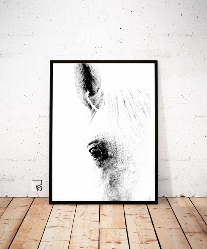 Horse black and white, Horse wall art, Horse Poster, Horse Print, Schimmel, Froilein Juno, Horse Gallery Wall, Horse Juniqe,